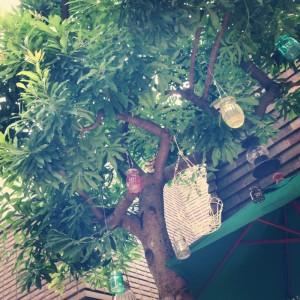 ドーナツ屋さんの木