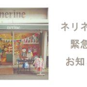 nerine